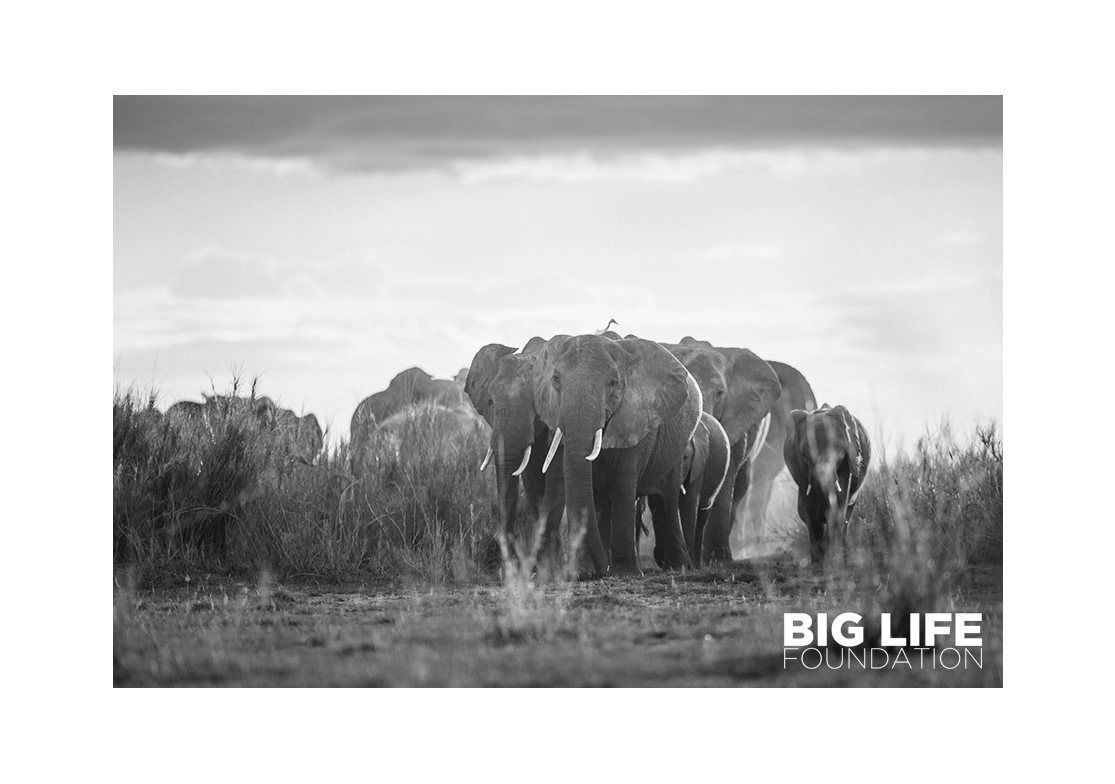big life main fondation